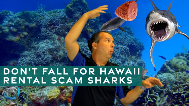 Don't fall for Hawaii rental scams sharks!
